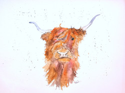 Heiland coo