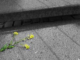 jauneescalier.jpg