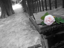 rosefontaine.jpg