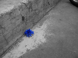fleurbleue.jpg