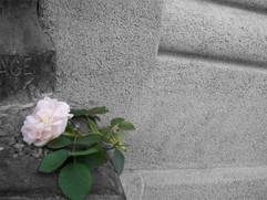 roserose.jpg