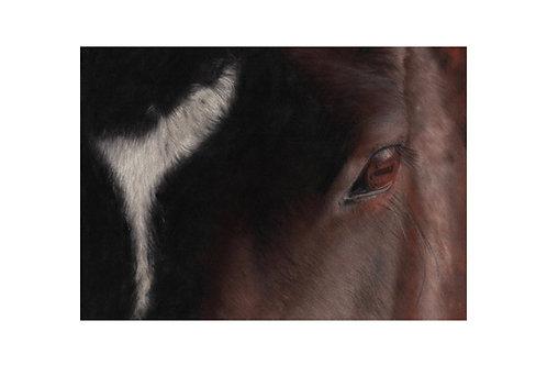'Eye Catching'Giclée Fine Art Print