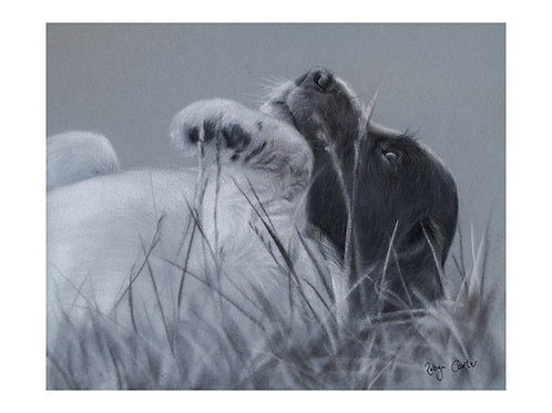 'Springer Puppy'Giclée Fine Art Print