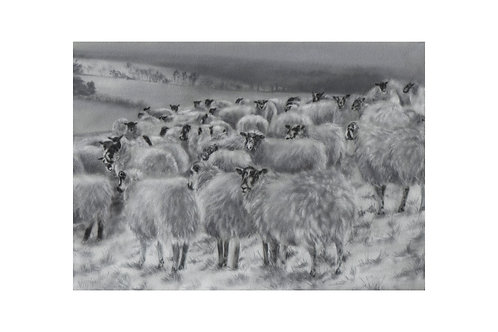 'Winter Sheep' Giclée Fine Art Print