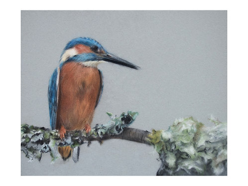 'King Fisher' Giclée Fine Art Print