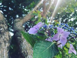 nu° herb garden