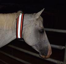 Sassari Collar Horse Visibility 124/7.JPG