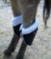Donkey HockSmiles.JPG