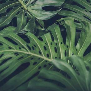 Best Indoor Plants for Queenslanders