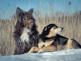 Voita koirakuvaus