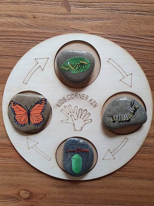 Life Cycle Board - Butterfly