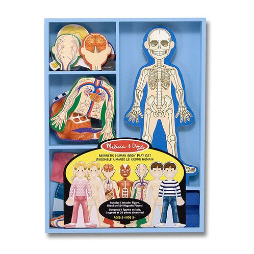 Human Body Magnetic Set