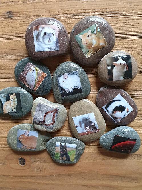 Story Stones - Pets (12pc)