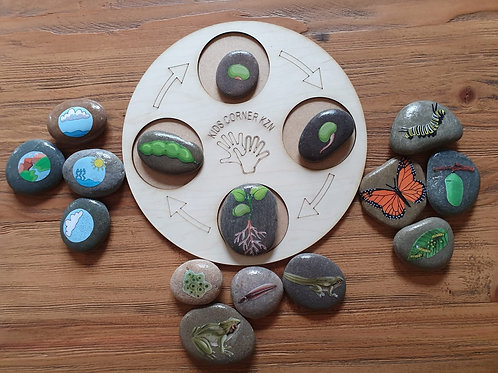 Life Cycle Board Combo - Butterfly, Bean, Frog and Weather