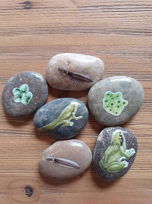 Story Stones - Life Cycle of a Frog (6pc)