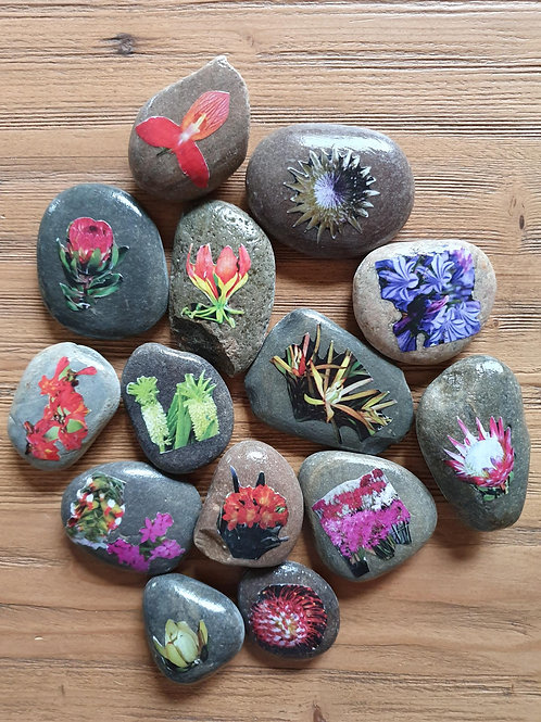 Story Stones - South African Flowers (14pc)