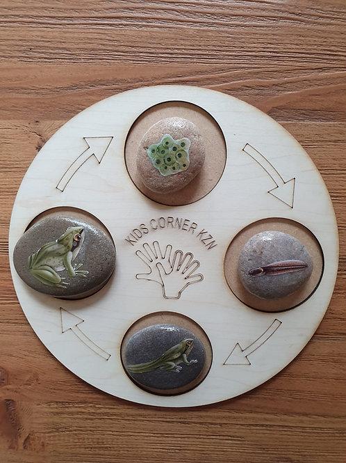Life Cycle Board - Frog