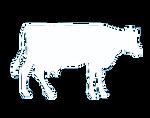marha tehén tejelő