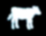 borjú tejpótló bikahízlalás