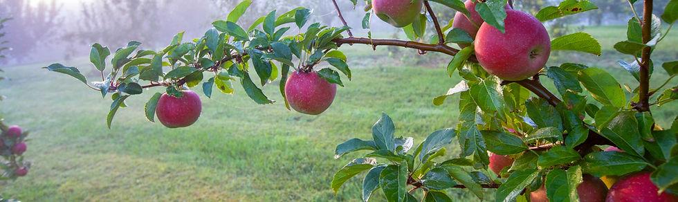 Jeter Mtn Apples - Credit Deni McIntyre - Crop Header Cropped.jpg