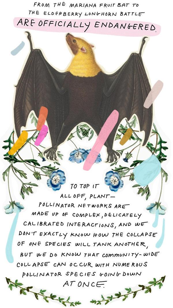 Pollinators-4.jpg