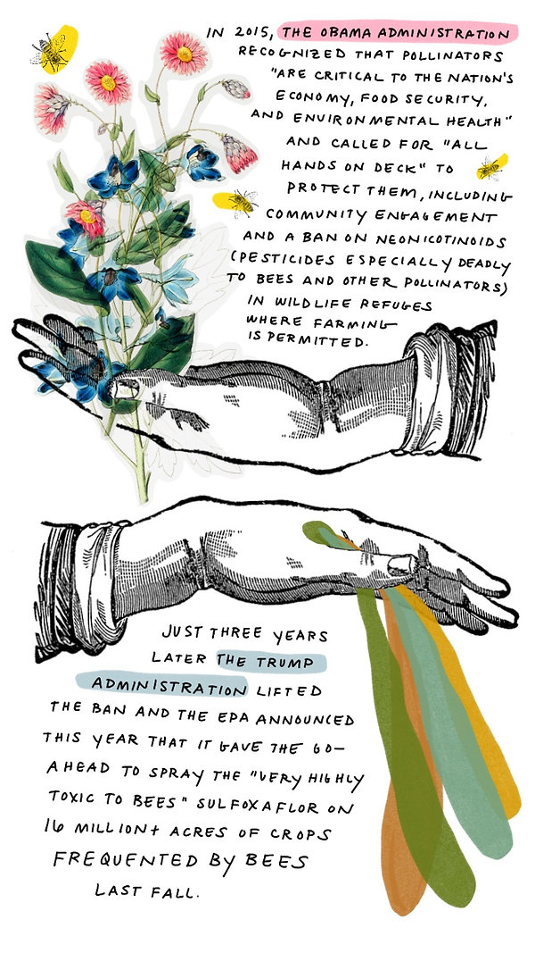 Pollinators-5.jpg