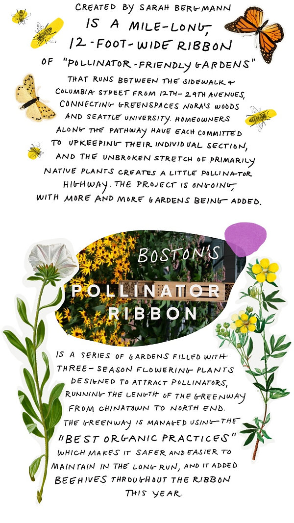 Pollinators-10.jpg