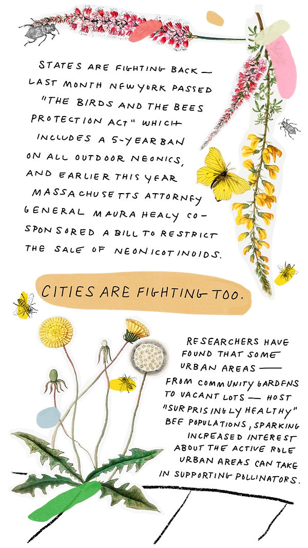 Pollinators-6.jpg