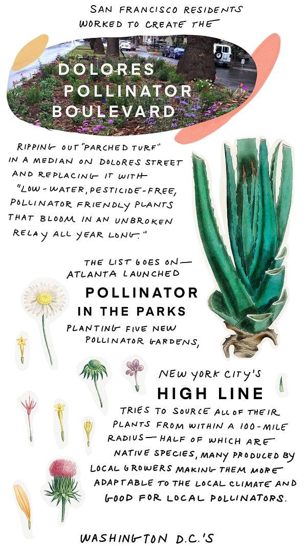 Pollinators-11.jpg