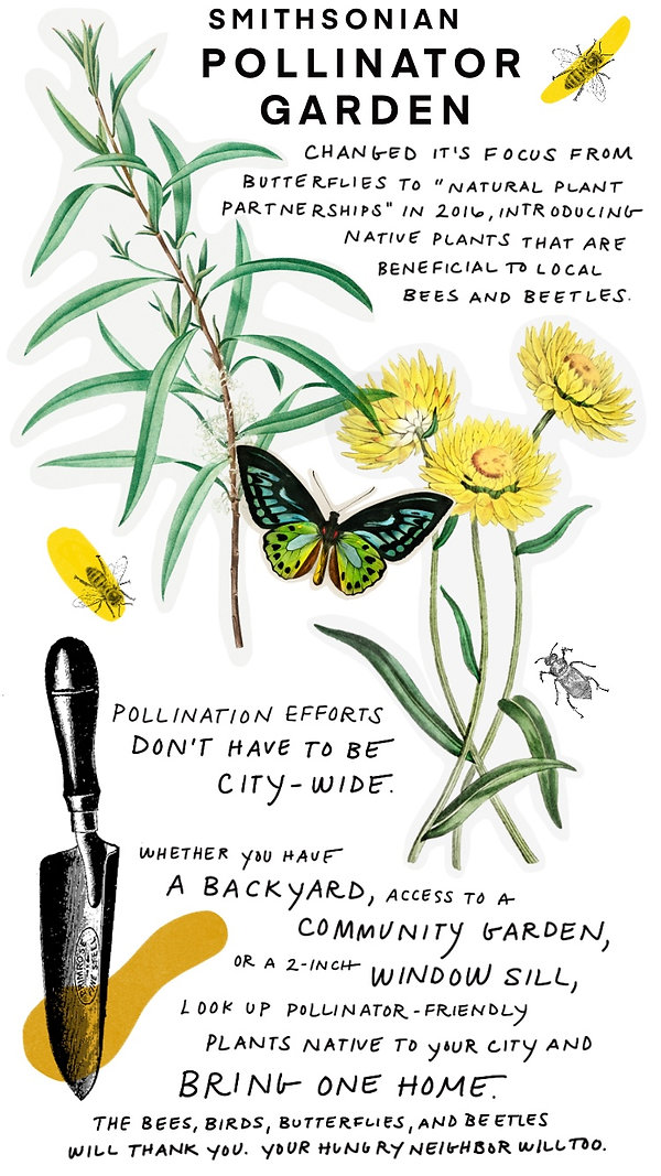 Pollinators-12.jpg