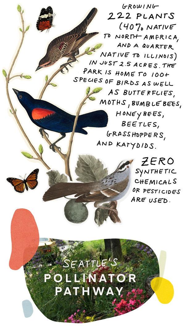 Pollinators-9.jpg