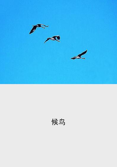 chinois -20 copie.jpg