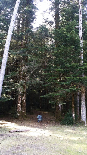 Bosque en Valle de Pinte