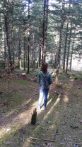 Bosque en Valle de Pintea
