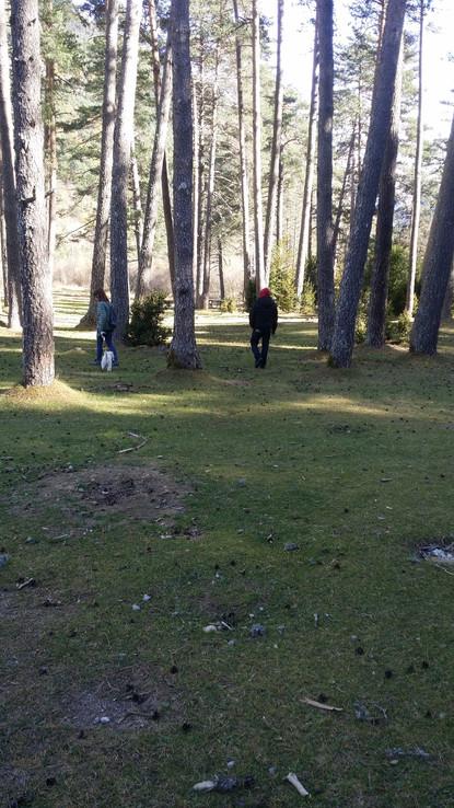 Bosque en Valle de Pineta