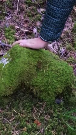 Tocando el bosque