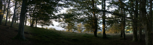 Macro de Bosque