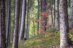 Bosque en Sobrarbe