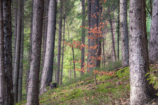 Bosque Valle de Pineta
