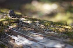 Belleza en un tronco