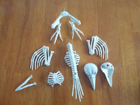 Fan Builds Animatronic Skeleton Bird