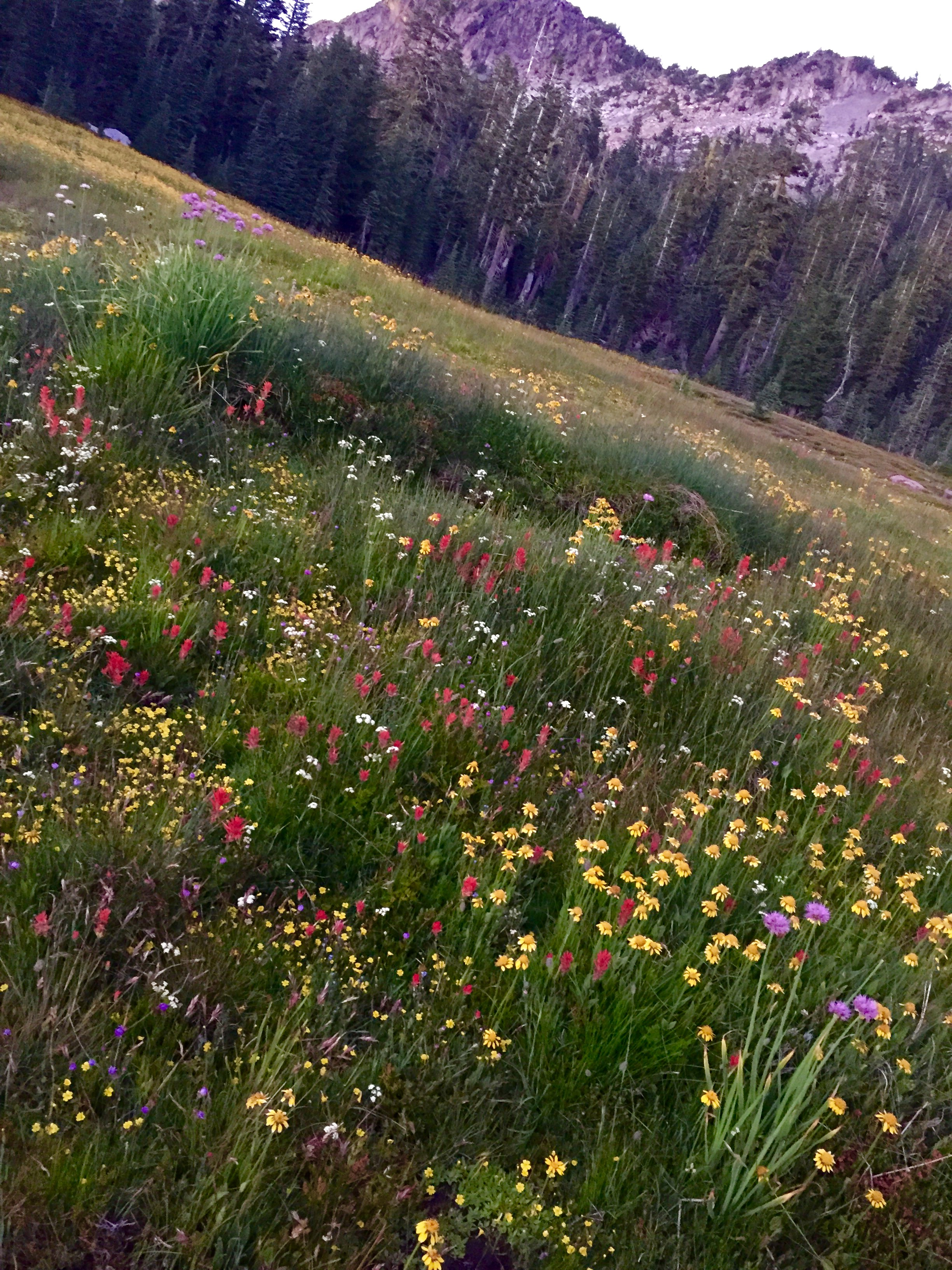 Mount Shasta Panther Meadow
