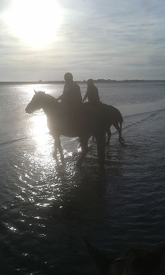 pension cheval, equitation, équitation western, cours équitation, ecurie propriétaire, écurie cheval, Manche Sainte Mère Eglise