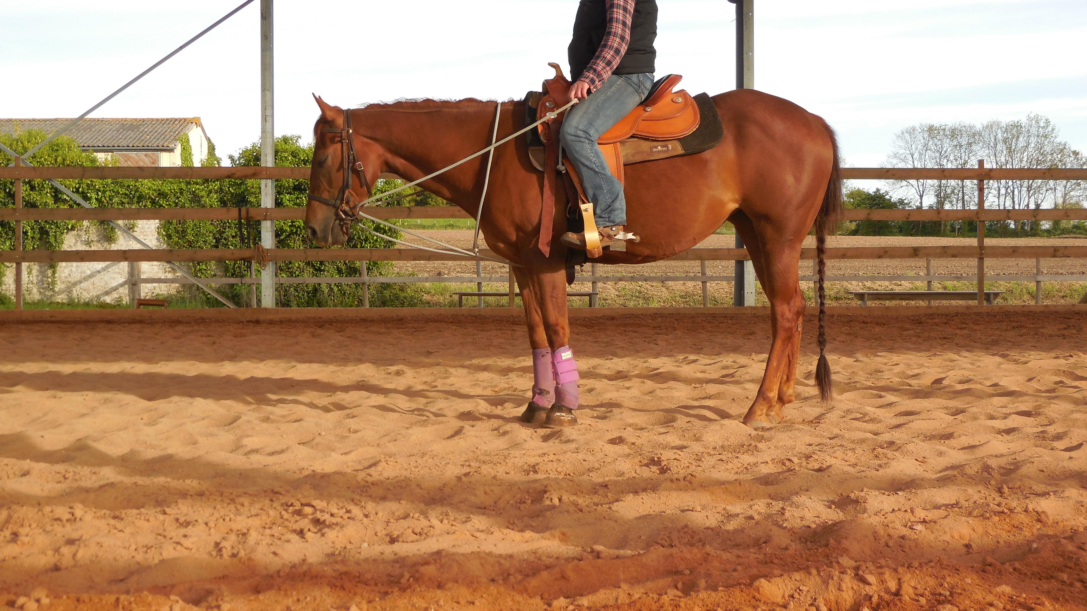 équitation Manche, pension cheval