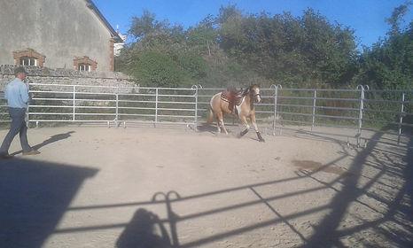 pension cheval, écurie propriétaire, débourrage, éthologie, équitation, équitation western Manche Sainte Mère Eglise