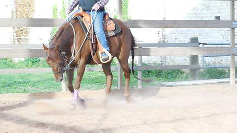 Pension cheval, équitation Manche Sainte Mère Eglise, équitation western, écurie de propriétaire , centre equestre Manche Sainte Mère Eglise