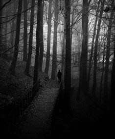 Fear of the dark woods?