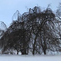 Bones of Trees.jpeg