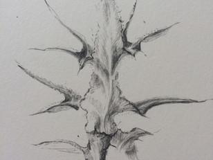 Fair Isle studies: Spear thistle leaf (Cirsium vulgare)