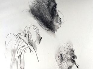 Sumatran Orangutan study